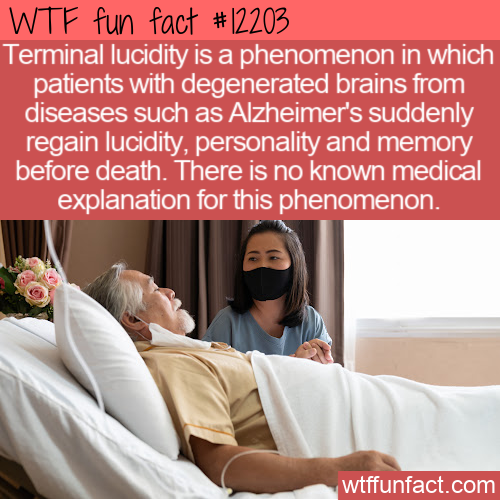 WTF Fun Fact - Terminal Lucidity