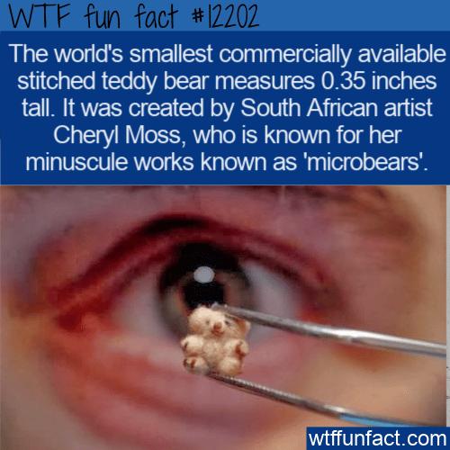 WTF Fun Fact - World's Smallest Teddy Bear